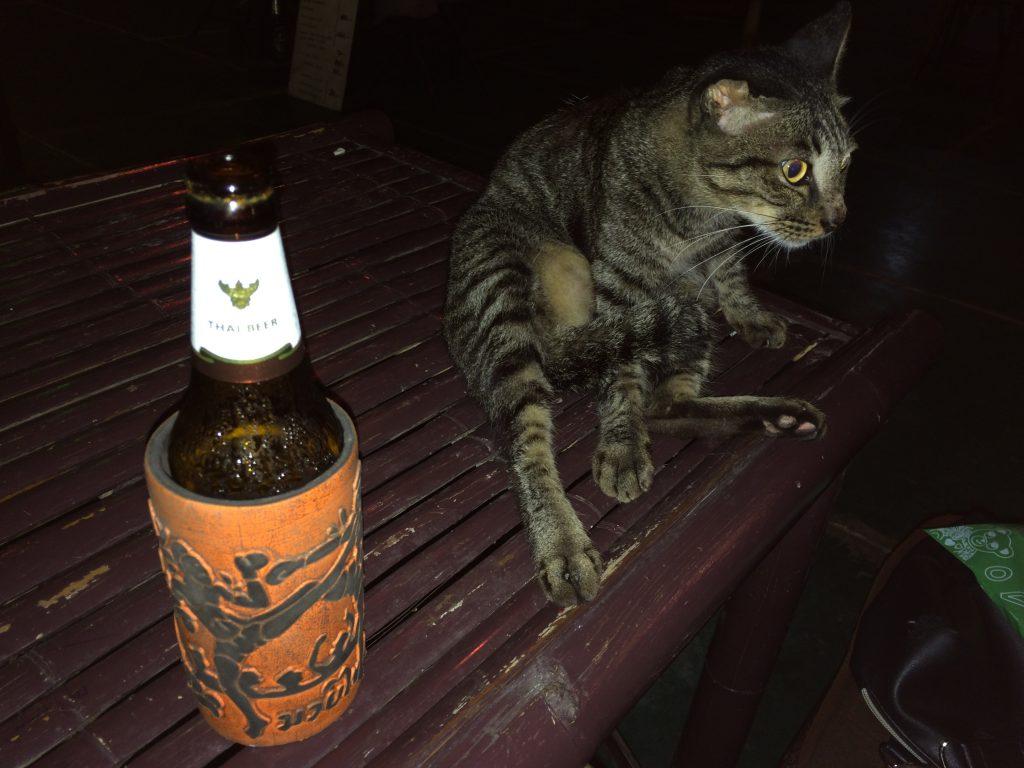 Forra Barにいる猫