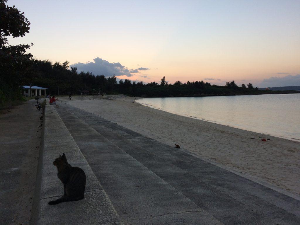 猫とパイナガマビーチ