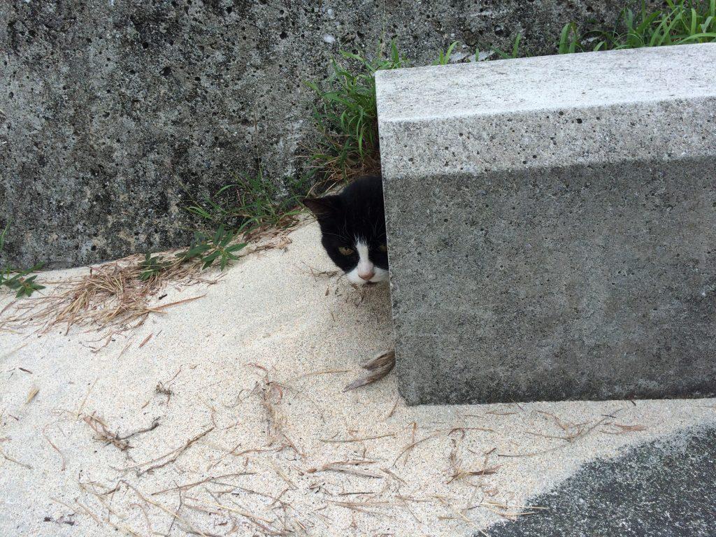 大神島の猫
