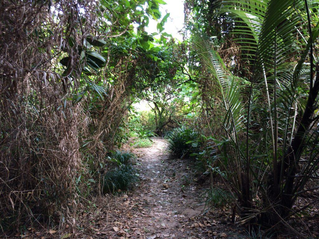 ウパーマ浜へと続く小道