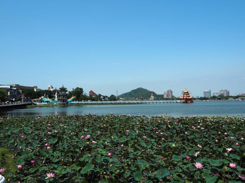 淡水湖には蓮の花が咲き乱れる