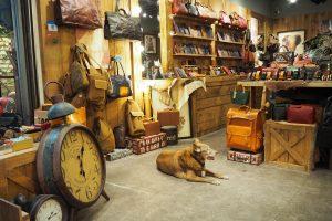 ノスタルジックな雰囲気のお店も多い