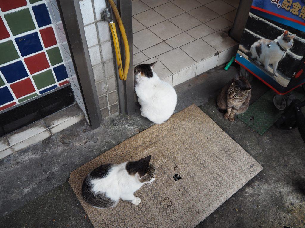 九份には猫も多い