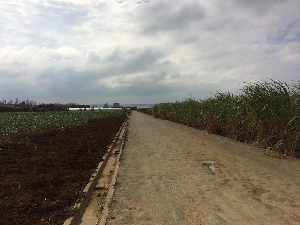 サトウキビ畑の道を海に向かって進む