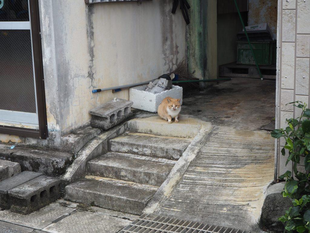 離島と言えば猫である
