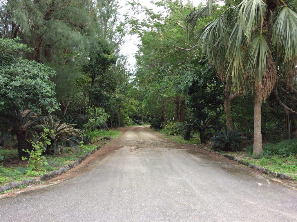 木々に囲まれた道を進む