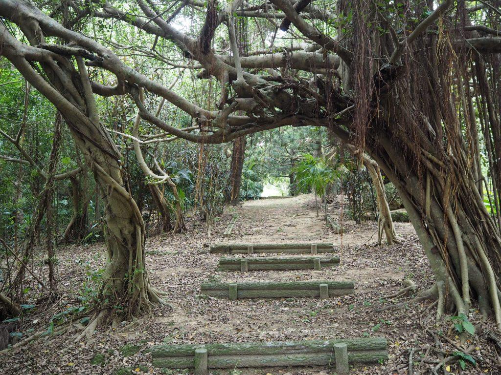 木々に囲まれた道を歩く