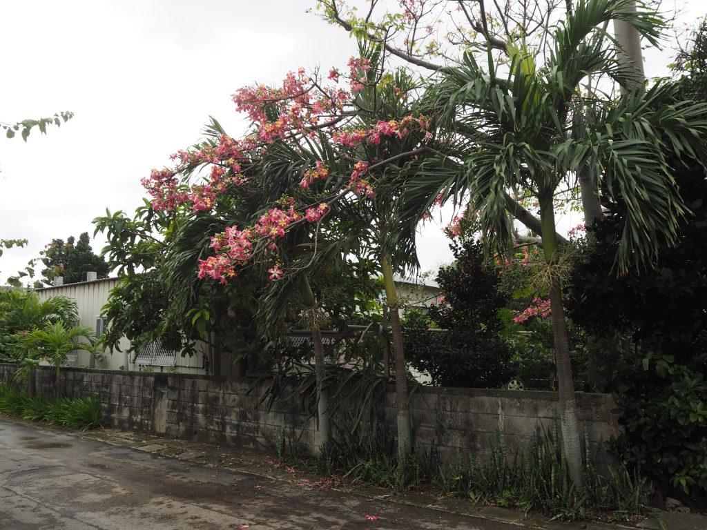 集落に咲く花