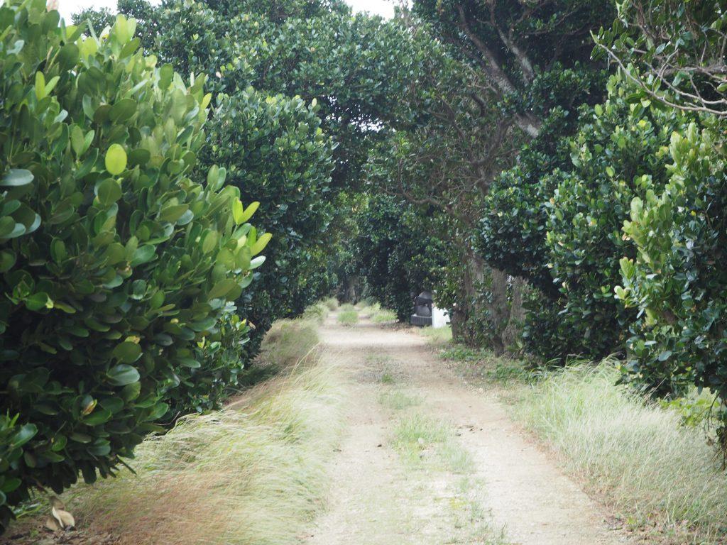 フクギ並木の中ほどには黒い犬がいる