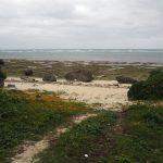 三ツ瀬公園のビーチ