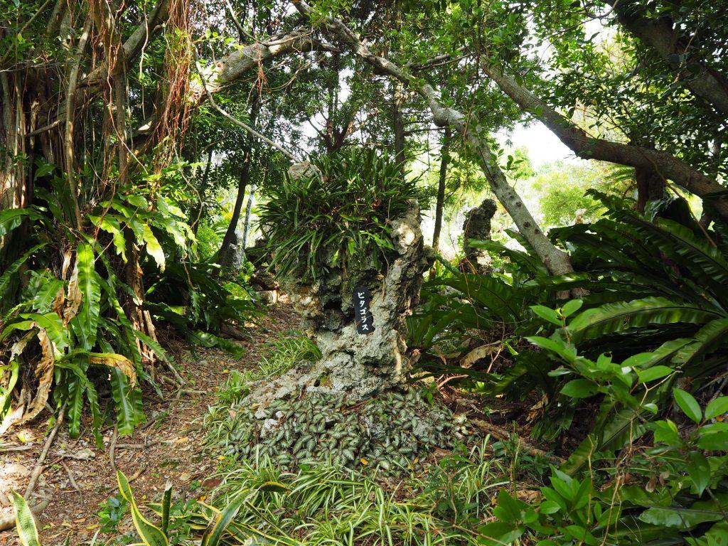 「ピタゴラス」の石