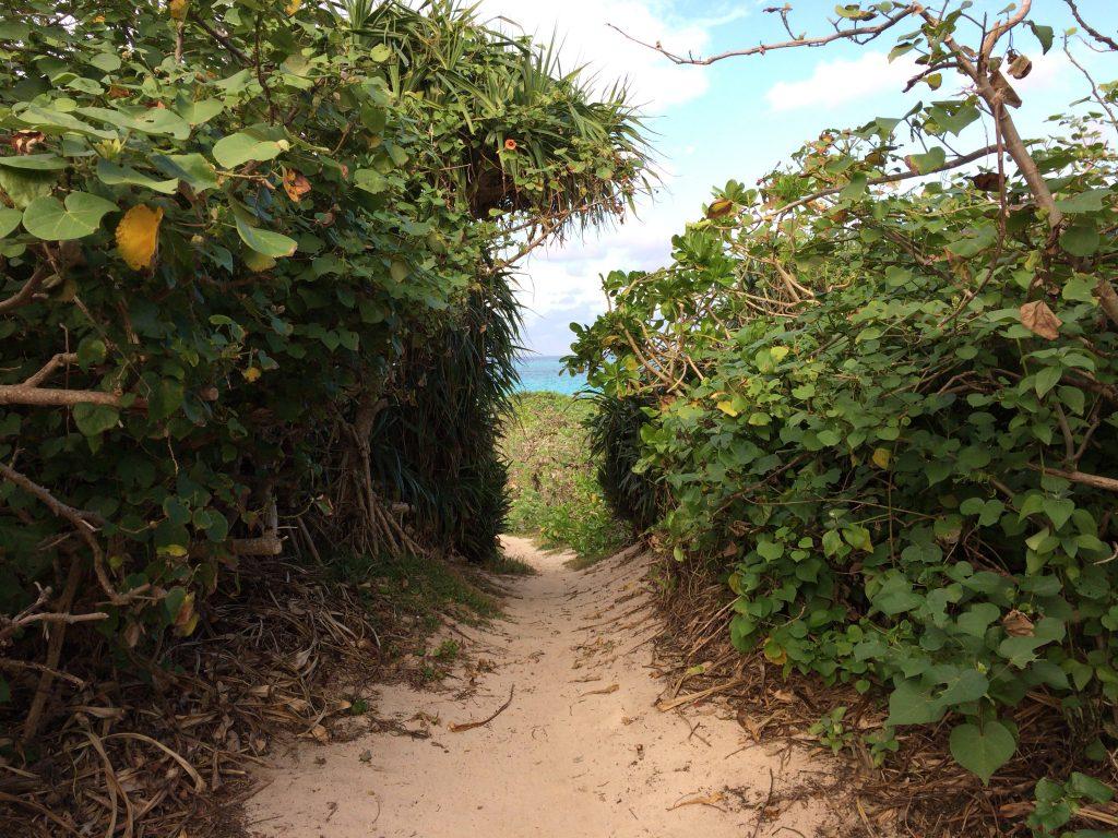木々の間を抜けてビーチへ