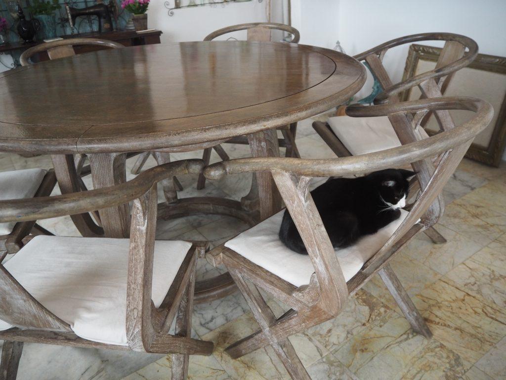 猫カフェにようこそ