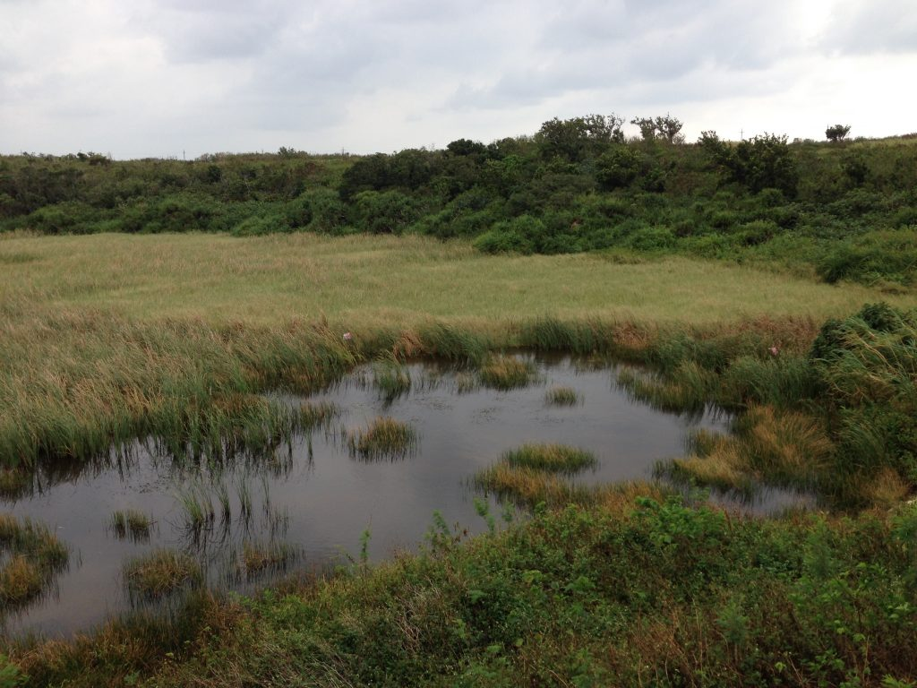 様々な野鳥が観察できる池間湿原
