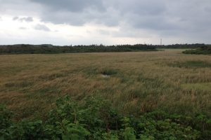池間湿原(いけましつげん)