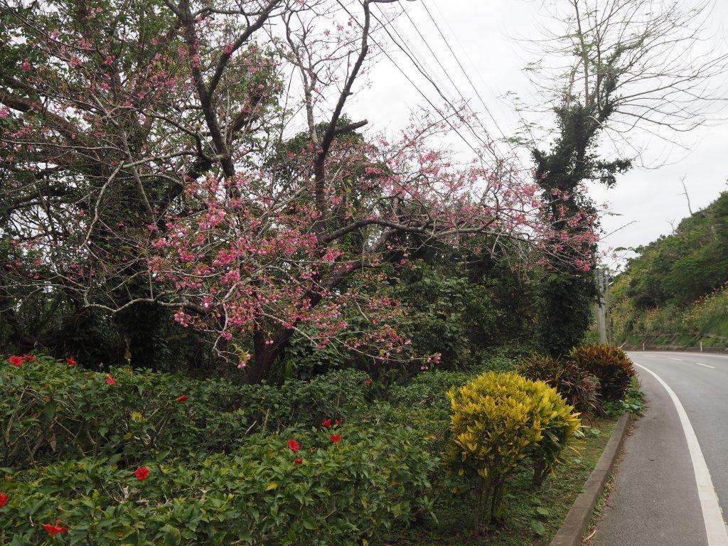 茶花市街地へと続く道