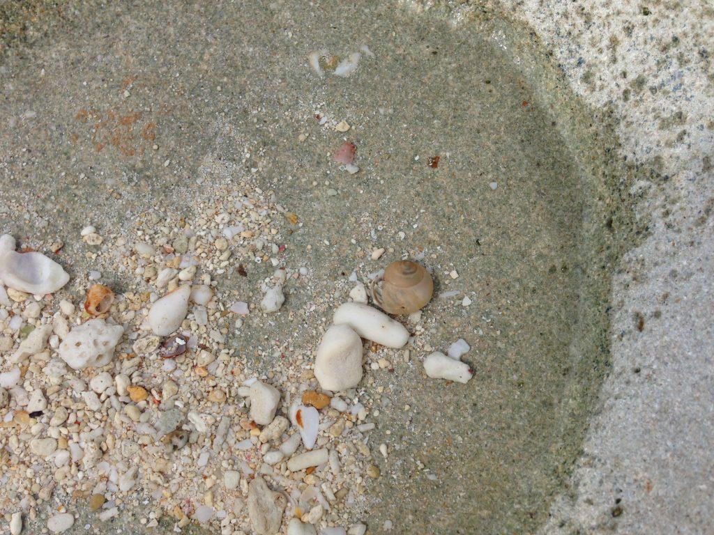 貝殻やヤドカリも多い