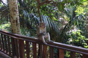 モンキーフォレストの猿