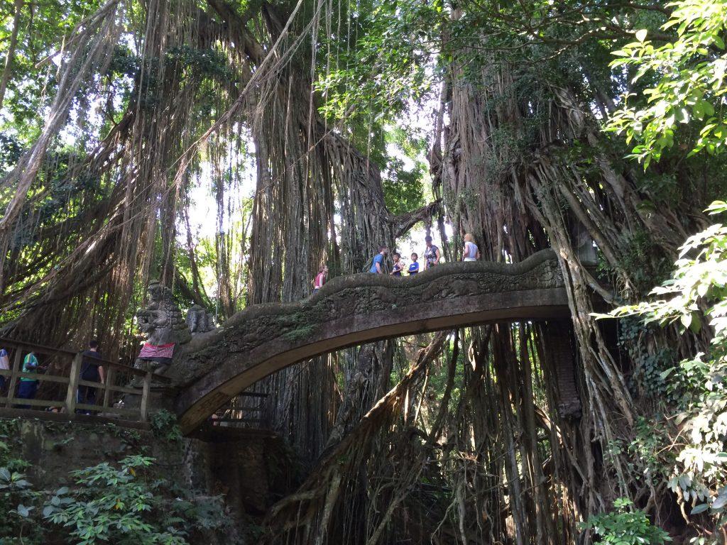 ガジュマルの木が生い茂る