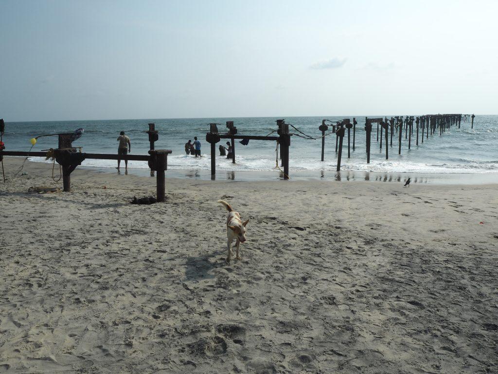 インドのビーチには犬が多い