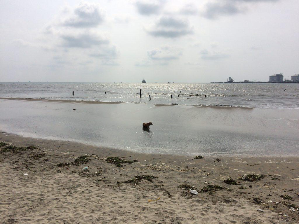 犬もビーチで水浴び
