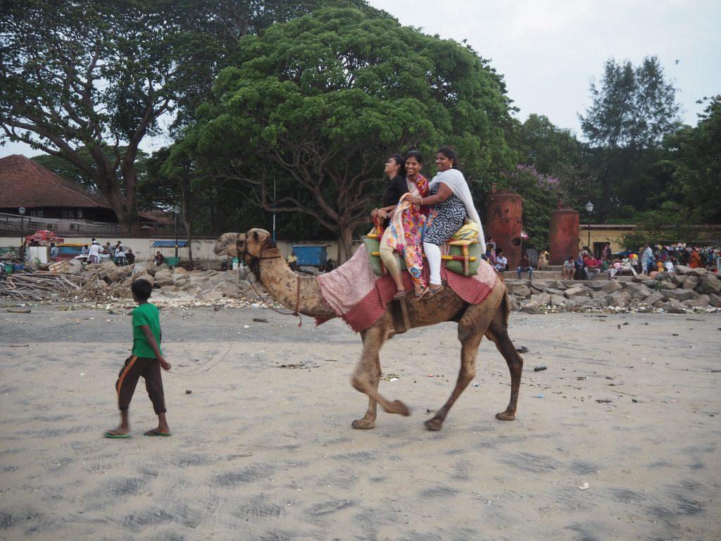 ラクダがビーチを行き来する