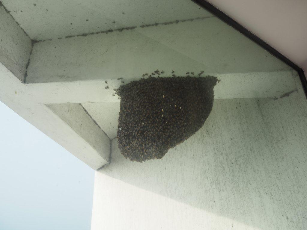 窓の外では蜂が飛び回っていた