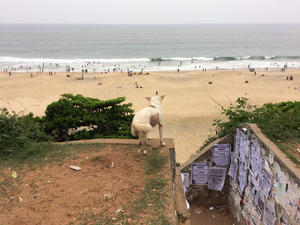 崖の上からバルカラビーチを見守る犬