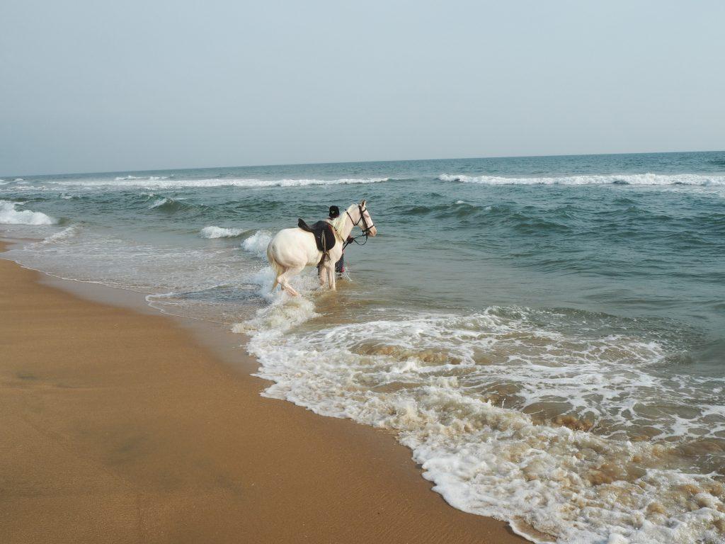 馬が水浴びをしている