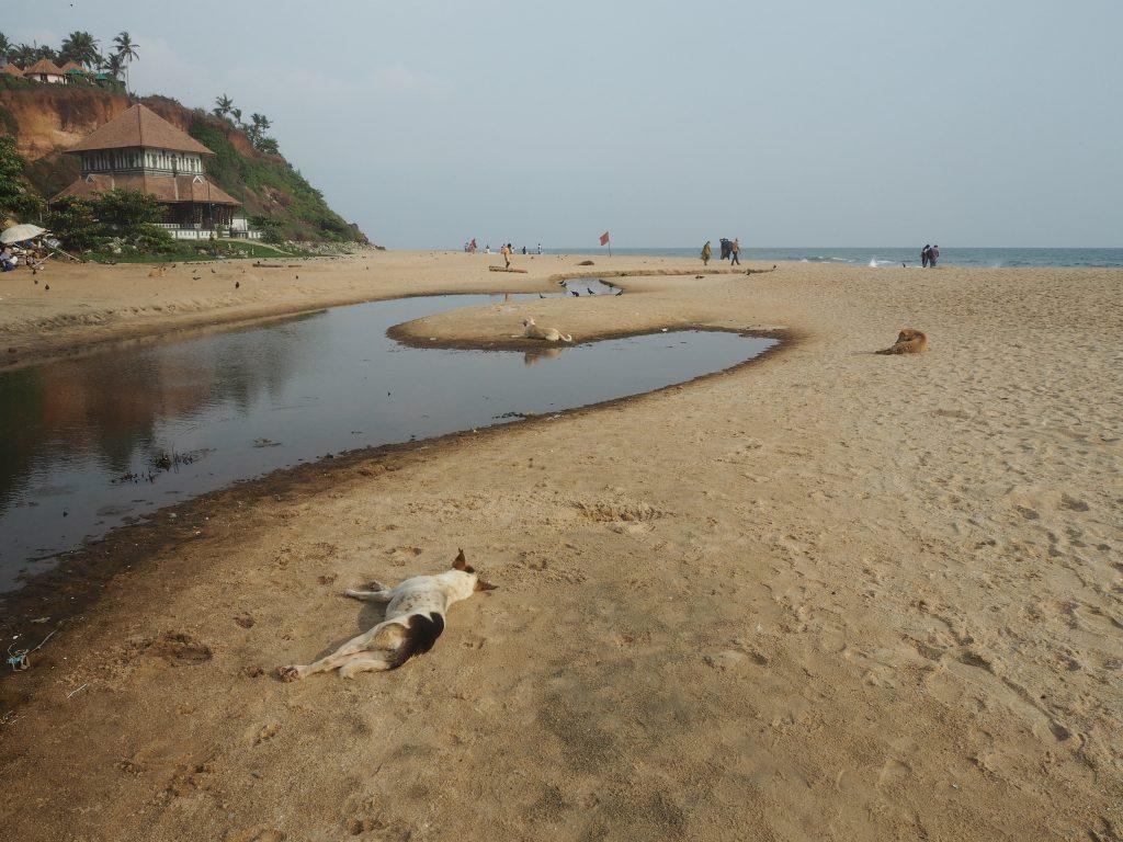 犬が寝そべるビーチにはところどころに水たまりがある