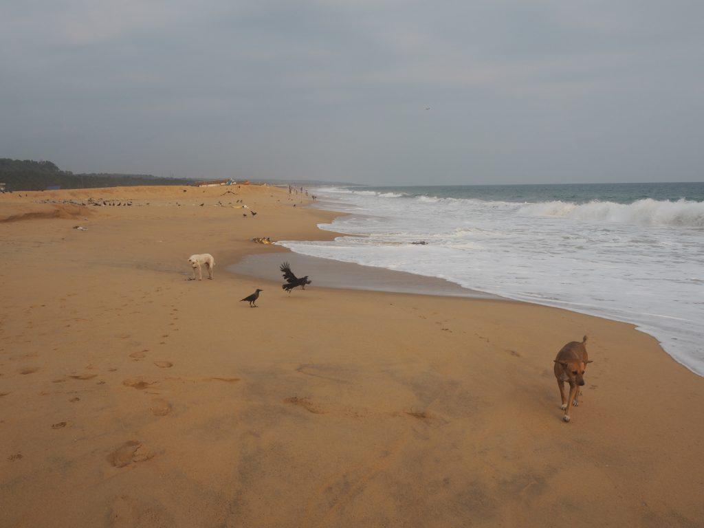 アディマラスラビーチ(Adimalathura Beach)。砂浜がどこまでも続く