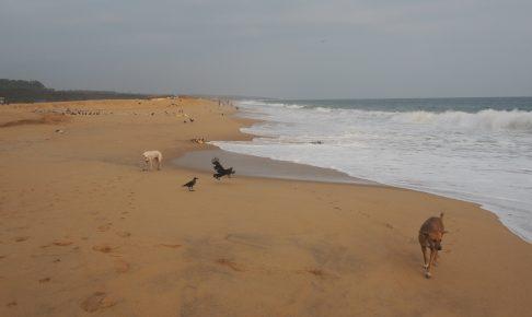 砂浜がどこまでも続く