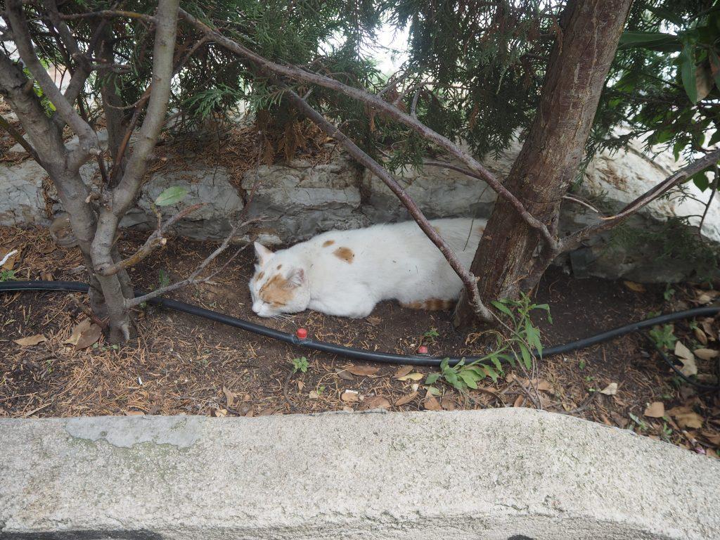 ギリシャと言えば猫である