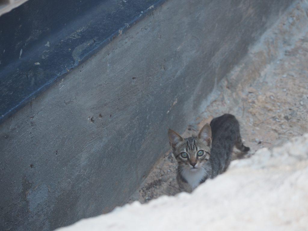 猫を見つけた