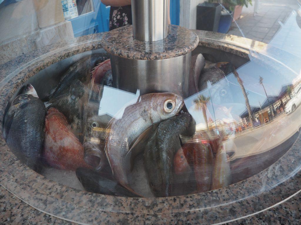 店頭に並ぶ魚。目でかいな