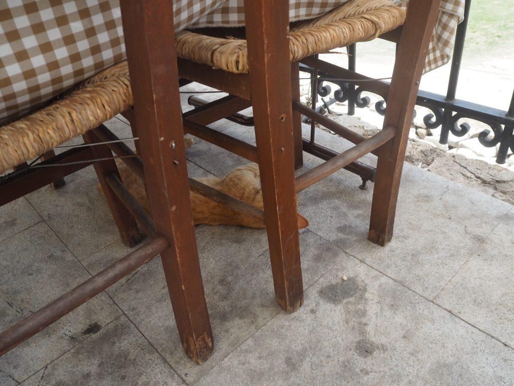 テーブルの下では猫が寝ている