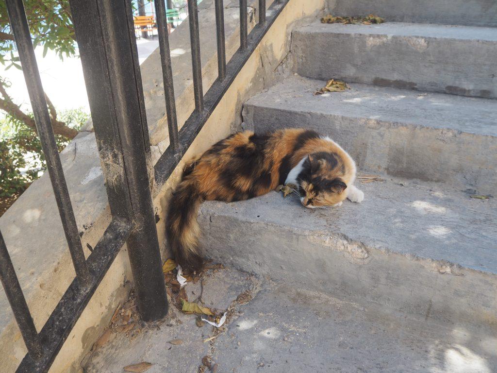 離島らしく猫が多い
