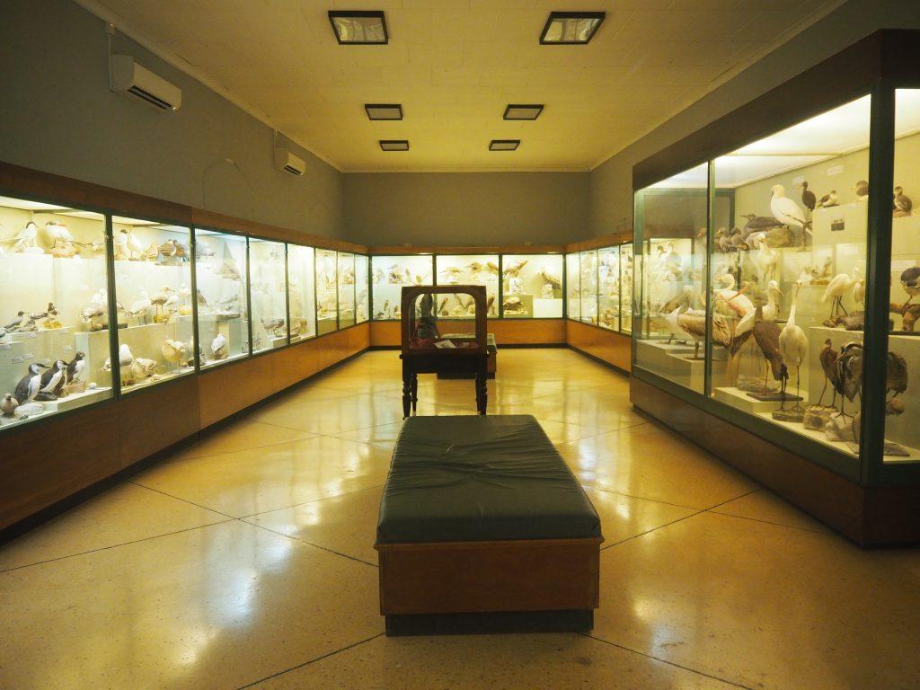 国立自然史博物館の内部(鳥類コレクション)