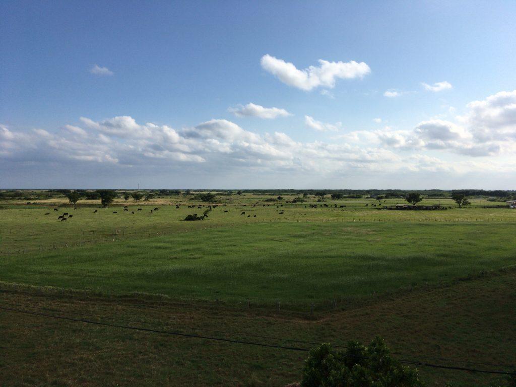 黒島展望台からの風景。広大な牧草地が広がる