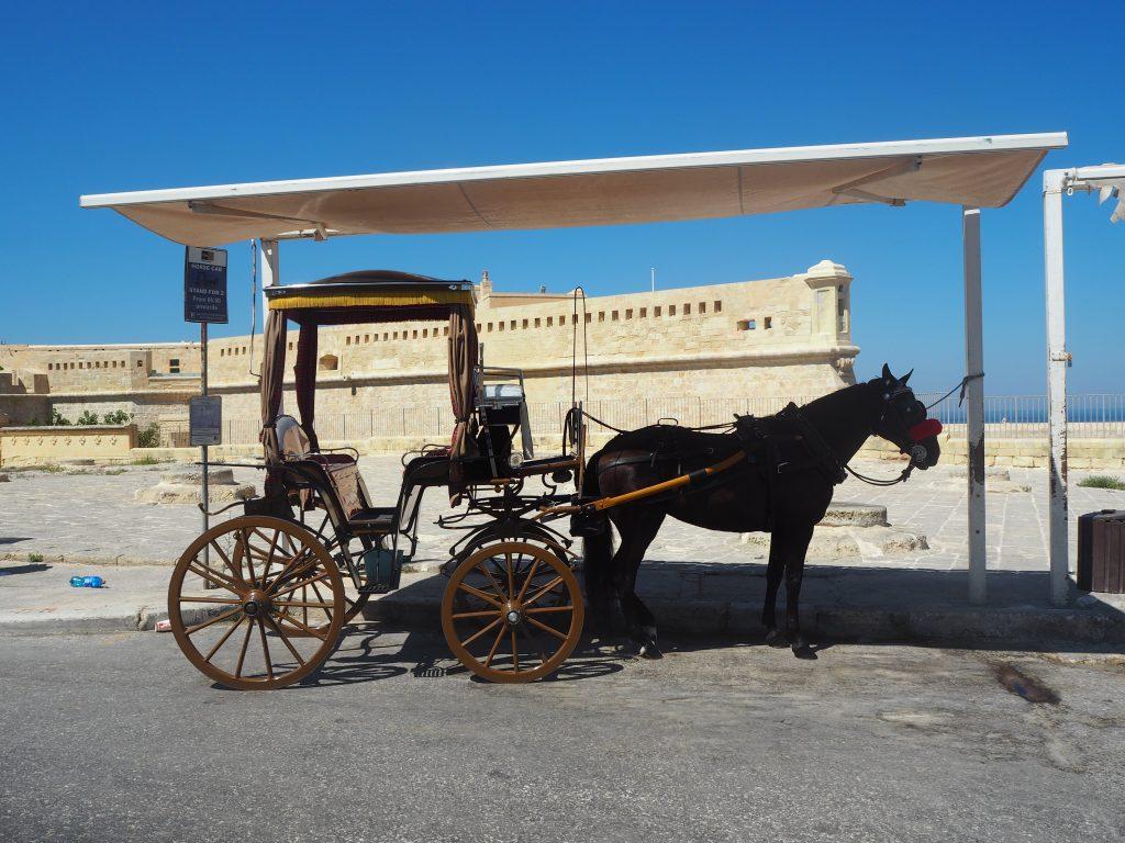 聖エルモ砦の外では酷暑の中、馬が立ち尽くしていた