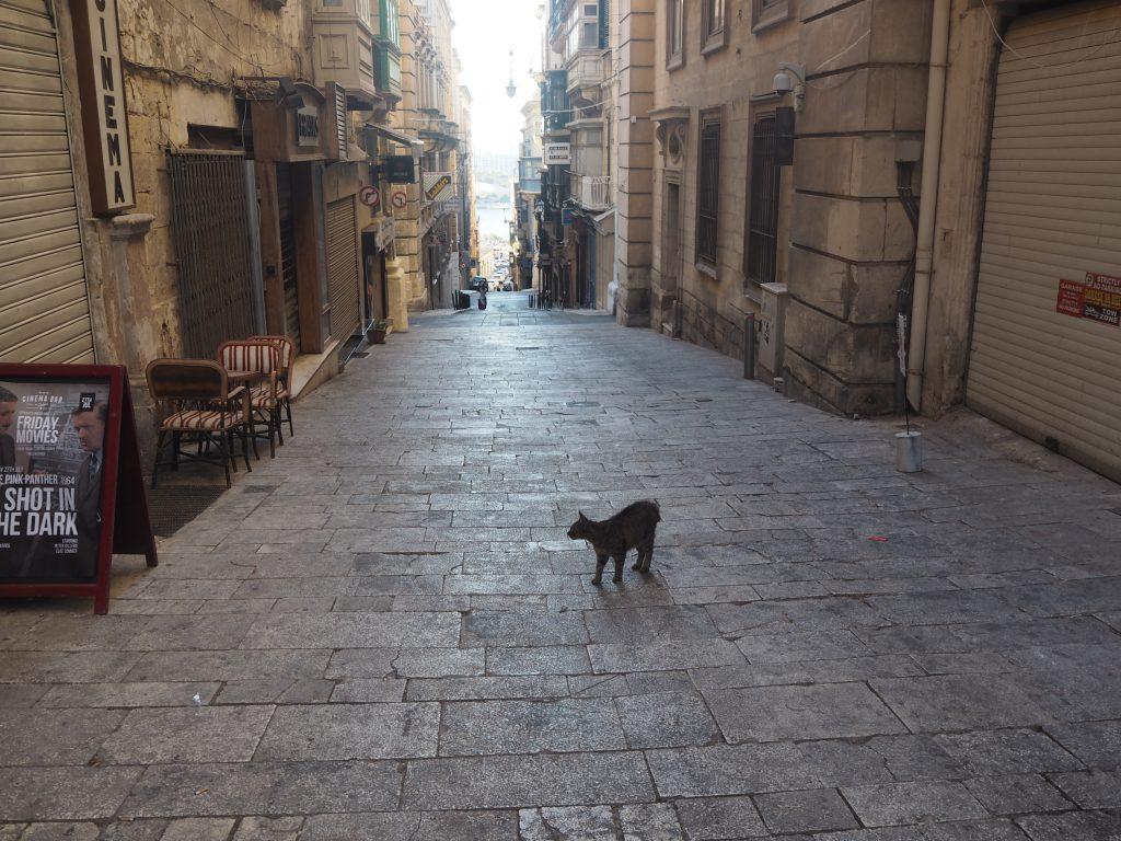 バレッタの街並みとネコ