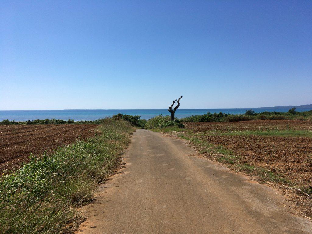 のどかな風景が広がる小浜島