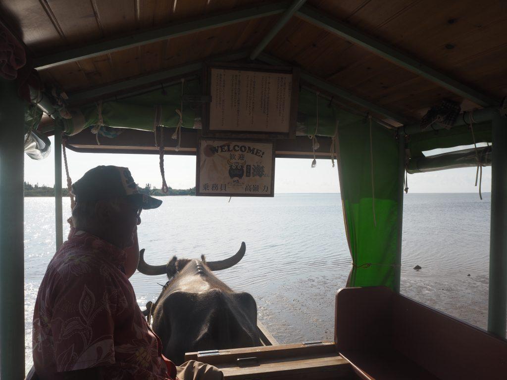 水牛車から由布島を望む
