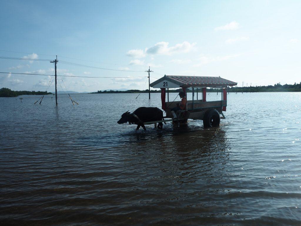 海を水牛車で渡れるのはここだけかも?