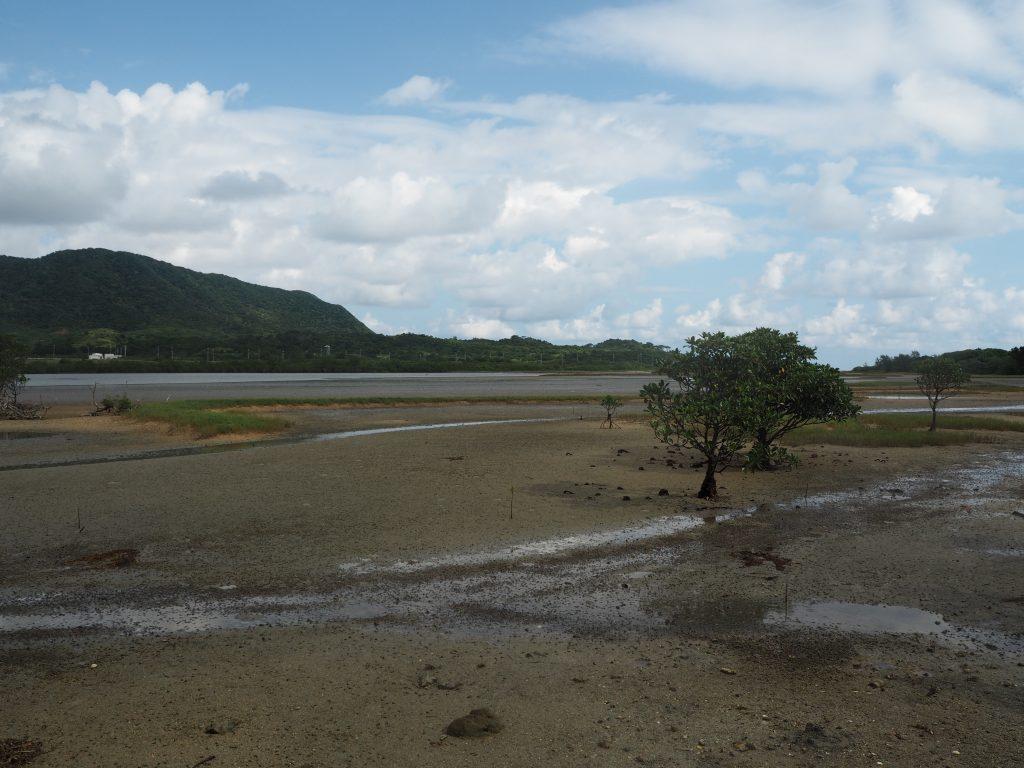 マングローブ林から西表島を望む