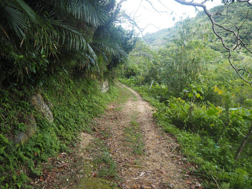 イダの浜へと続く山道