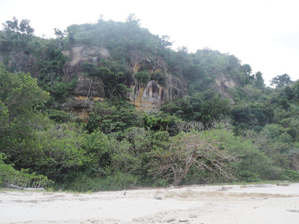ビーチの背後に迫る西表島のジャングル
