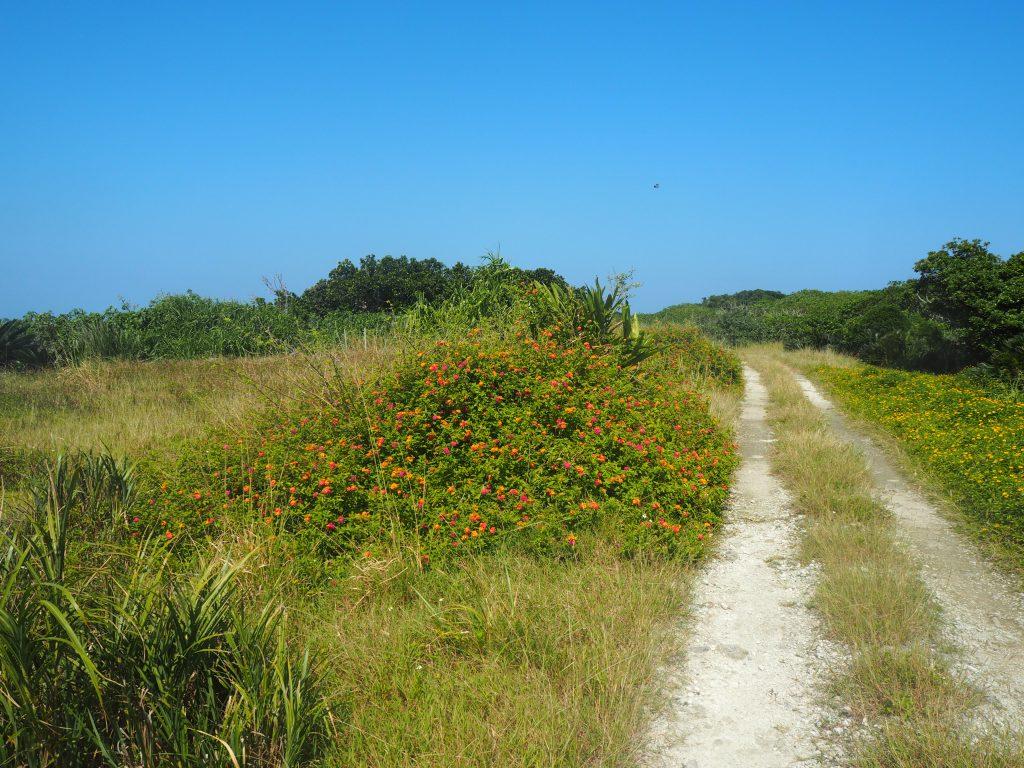 自然豊かな鳩間島の道
