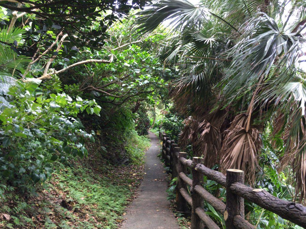 ティンダバナの遊歩道を歩く