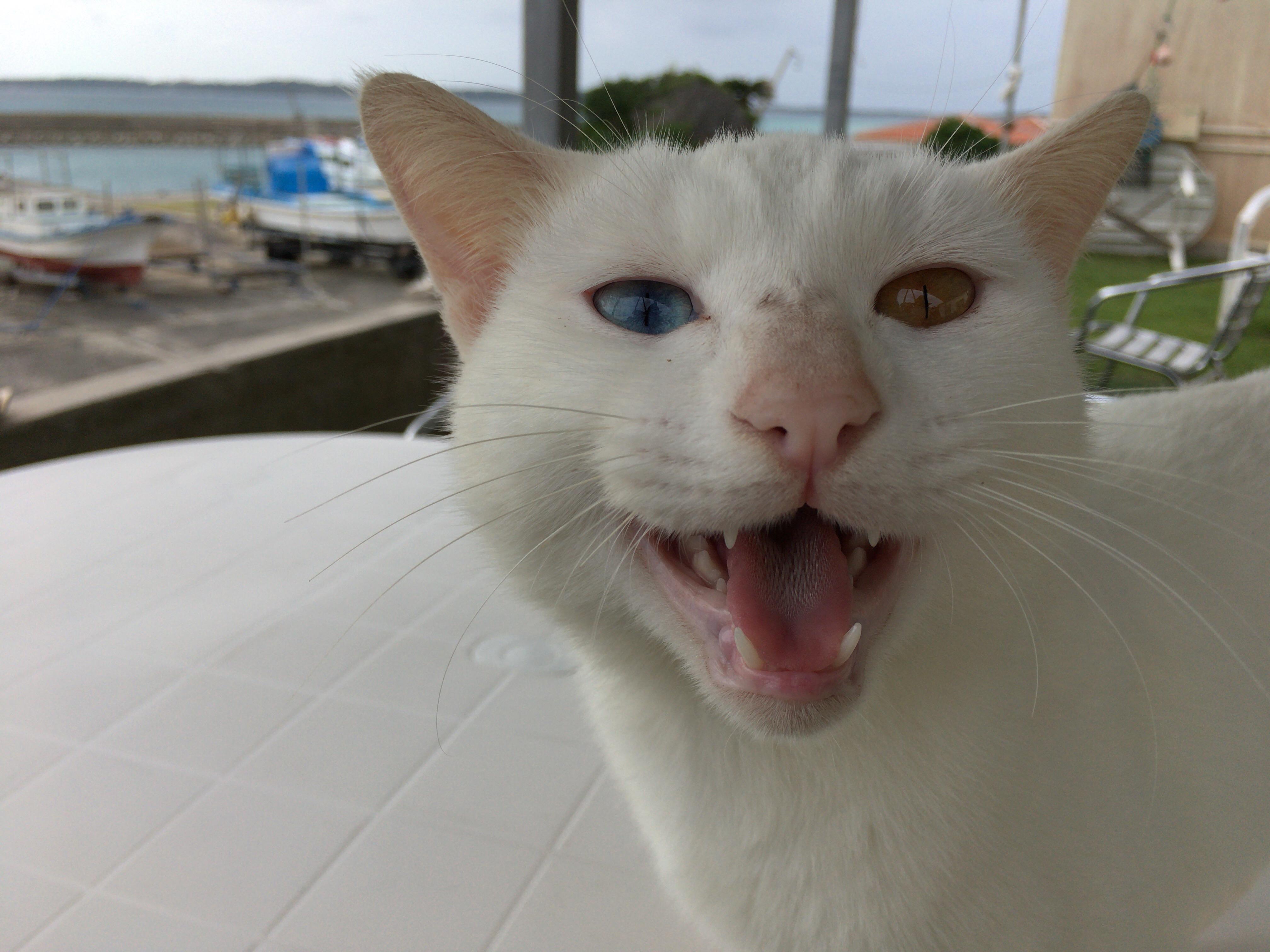 大神島のネコ